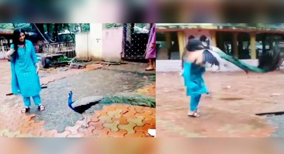 The peacock that attacked the Bigg Boss actress